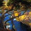 Cleft Born Trees Monterey - Franz Bischoff