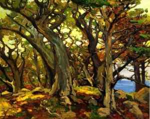 Monterey Cypress - Franz Bischoff