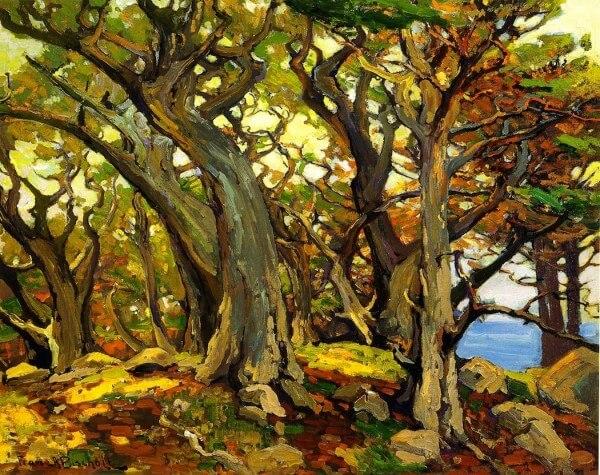 Monterey Cypress – Franz Bischoff