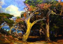 Windswept Twisted Cypress - Franz Bischoff
