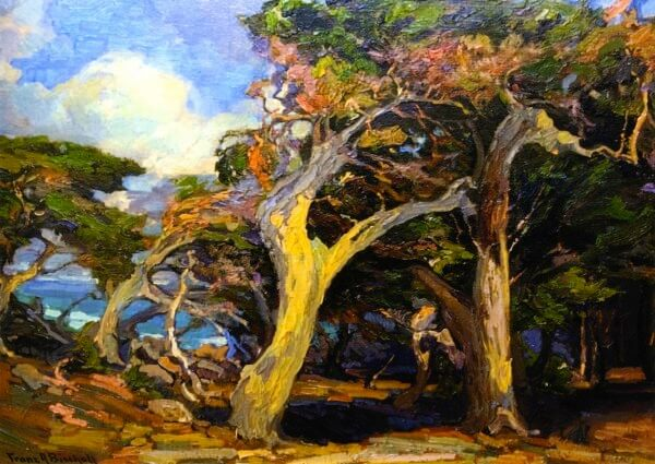 Windswept Twisted Cypress – Franz Bischoff