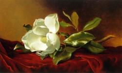 A Magnolia On Red Velvet - Martin Johnson Heade