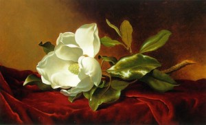 A Magnolia On Red Velvet - Martin Johnson Heade