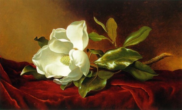 A Magnolia On Red Velvet – Martin Johnson Heade